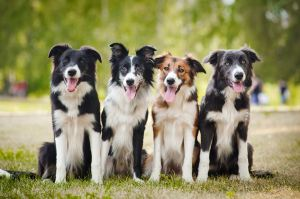 Des chiens heureux