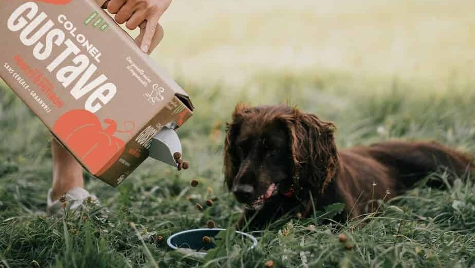 nutriments-chien