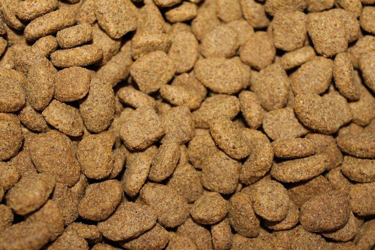 nutriments chien
