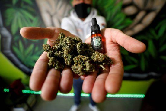 cannabis en france