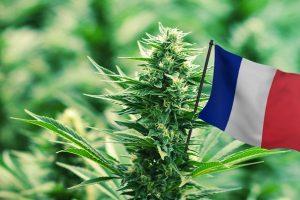 cannabis france